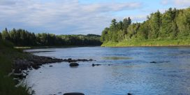 Miramichi Fishing Report for Week of August 11, 2016