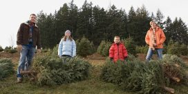 Promoting Locally Grown Christmas Trees