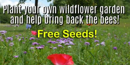 Get Your Free Seeds #BringBackTheBees